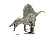 3D Rendering of a Spinosaurus Dinosaur Fine Art Print