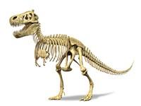 3D Rendering of a Tyrannosaurus Rex Dinosaur Skeleton Fine Art Print
