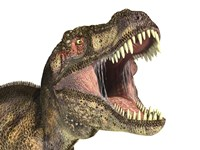 Close-up of Tyrannosaurus Rex dinosaur with Mouth Open Fine Art Print