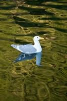 Bird, Desolation Sound, British Columbia, Canada Fine Art Print