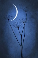 Blue Crescent Moon Fine Art Print