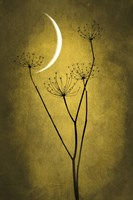 Yellow Crescent Moon Fine Art Print
