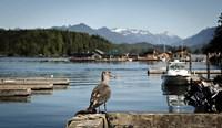 British Columbia, Vancouver Island, Strathcona Park, Harbor Fine Art Print