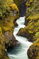 River, Vancouver Island, British Columbia Fine Art Print