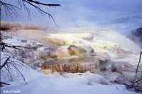 Mammoth Hot Springs - Yellowstone Fine Art Print