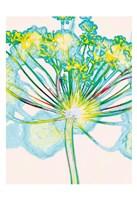 Pop Dandelion Fine Art Print