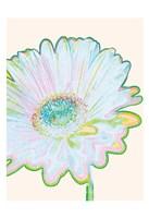 Pop Daisy Fine Art Print