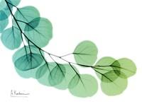 Eucalyptus Green Blue Fine Art Print
