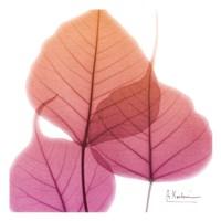 Bo Tree Pink Orange Fine Art Print