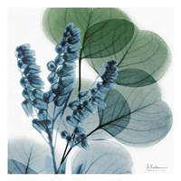 Lilly Of Eucalyptus Framed Print