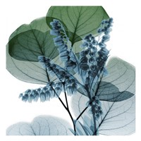 Lilly Of Eucalyptus 2 Fine Art Print