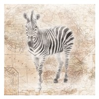 African Animals - Zebra Fine Art Print