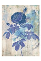My Blue Rose Fine Art Print