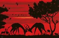 Samburu Park Fine Art Print
