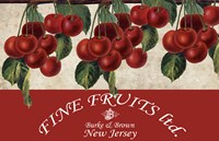 Cherries III Fine Art Print
