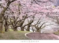 Blossom Hill Fine Art Print
