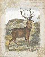Woodland Stag I Framed Print