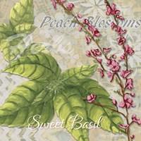 Herbs 4 Basil Fine Art Print