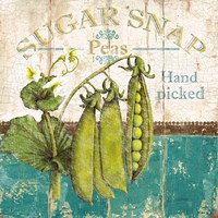 Sugar Snap Fine Art Print