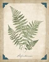 Vintage Ferns IX Framed Print