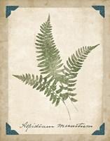 Vintage Ferns X Fine Art Print