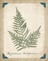 Vintage Ferns XI Framed Print