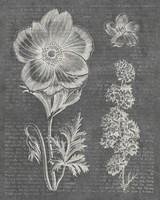 Eden Spring I Gray Framed Print