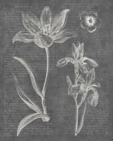 Eden Spring II Gray Framed Print
