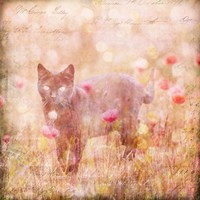 Romantic Cat Fine Art Print