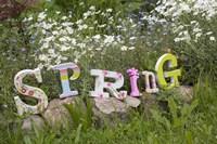 Spring Sign Fine Art Print