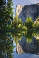 El Capitan reflected in Merced River Yosemite NP, CA Fine Art Print