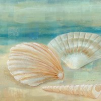Horizon Shells IV Framed Print