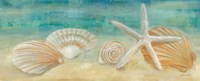 Horizon Shells Panel I Fine Art Print