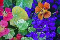 British Columbia, Victoria, Flowerboxes Fine Art Print