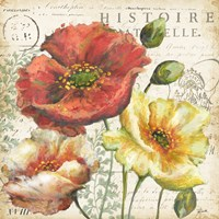 Spice Poppies Histoire Naturelle I Framed Print