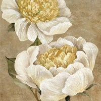 Up Close Cream Peony Fine Art Print