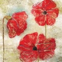 Poppy Passion II Framed Print