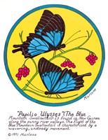 Blue Mountain Swallowtail Fine Art Print