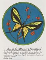 Paradisea Fine Art Print