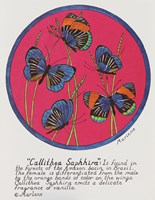 Callithea Saphhira Fine Art Print