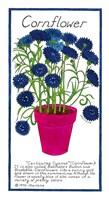 Cornflower Fine Art Print