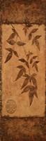 Vert Leaves Choc Brown Right Framed Print
