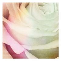 Macro Rose Fine Art Print