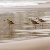 Shore Birds I Fine Art Print