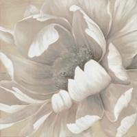 Winter Blooms II Framed Print