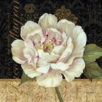 Antique Still Life Peony Framed Print