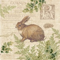 Woodland Trail IV (Rabbit) Fine Art Print