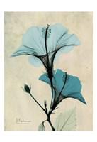 Hibiscus 3 Fine Art Print