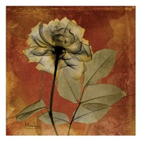 Rose 6 Fine Art Print