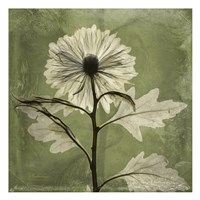 Chrysanthemum Green Fine Art Print